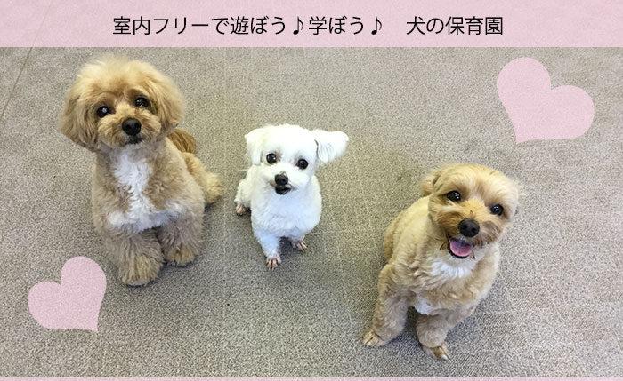 犬の保育園・ペットホテル・室内プレイルーム